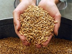 """Головная компания второго по величине экспортера зерна в РФ, группы """"Росинтерагросервис"""""""